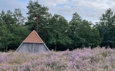 Tuck, tuck, die Lüneburger Heide blüht!